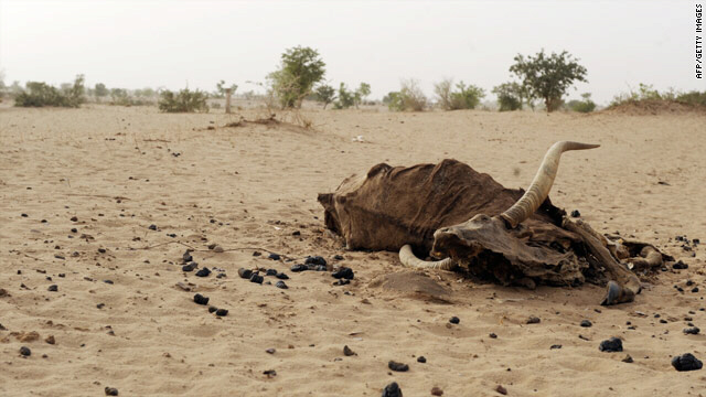 Bull carcass is evidence of Niger's food shortages
