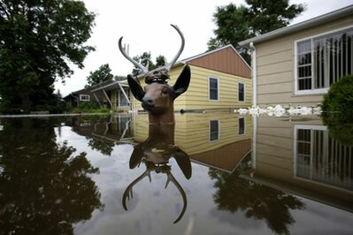 Head of lawn deer remains above flood waters