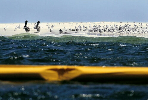 Oil spill hits Gulf Coast habitats